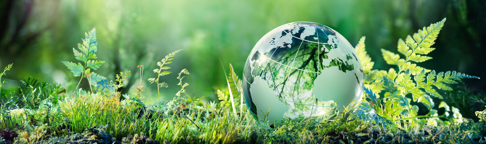 Fun Sustainability Tips in the Workplace